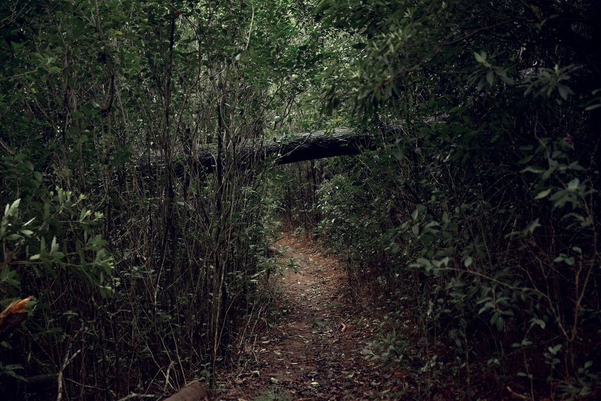 Photographer Tali Kimelman's forest bathing series invites the viewer on a sensory journey.