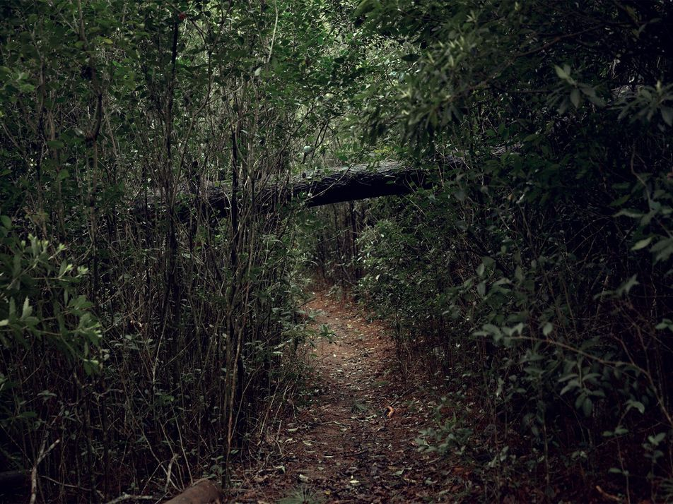 Forest bathing: one photographer's communion with the woods