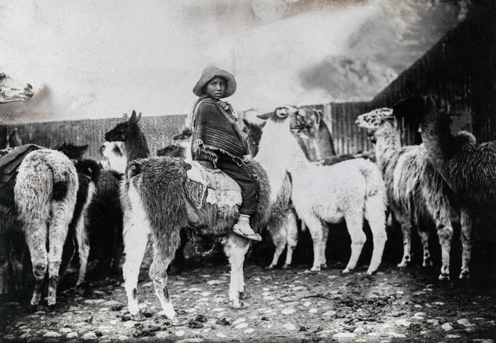 Adams published more than 20 stories for National Geographic magazine. In this photograph, a man guides ...