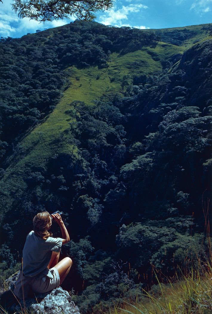 Alone in ape country, the author scans a hill for chimpanzees. Perched 1,500 feet above a ...