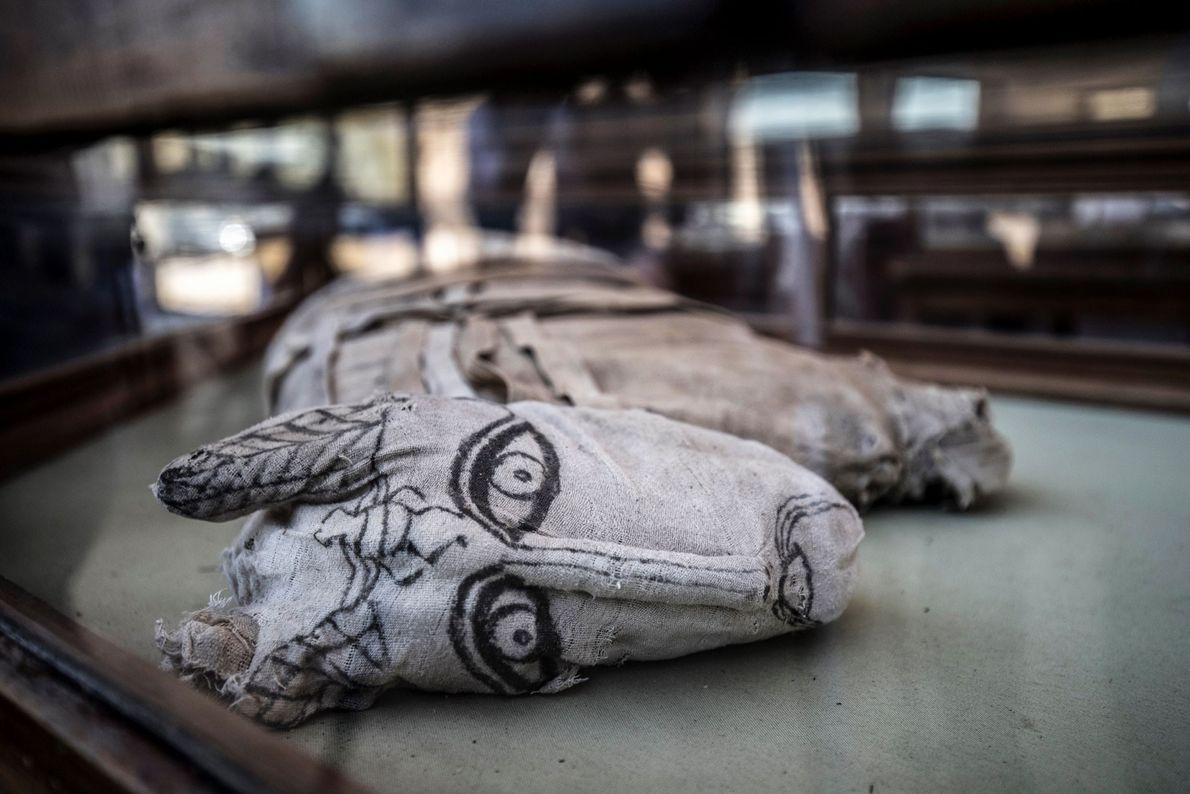 The discovery was made in Saqqara, where the remains of hundreds of mummified cats have been ...