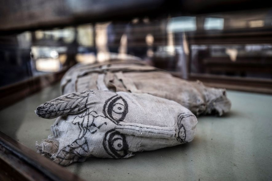 Very rare lion mummies discovered in Egypt