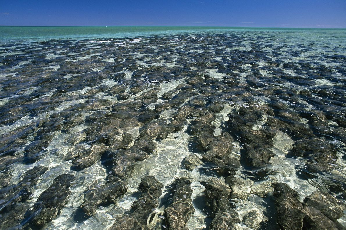 Some of the oldest fossils of life on Earth are stromatolites: mineral structures formed by mats ...