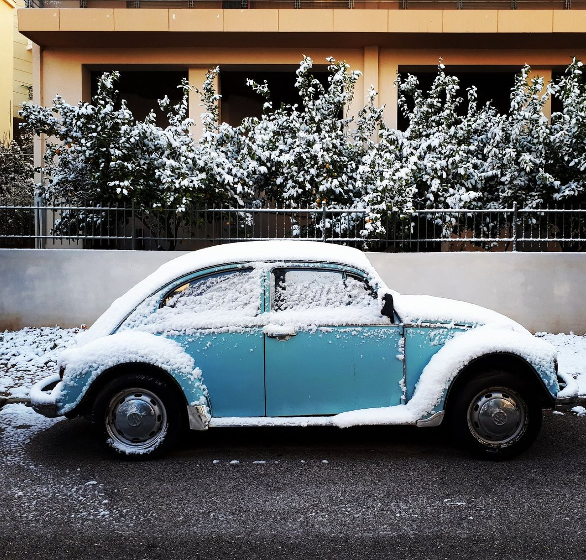 Your Shot photographer Georgia Tsoukalas made this image of a Volkswagon Beetle while walking her dog ...