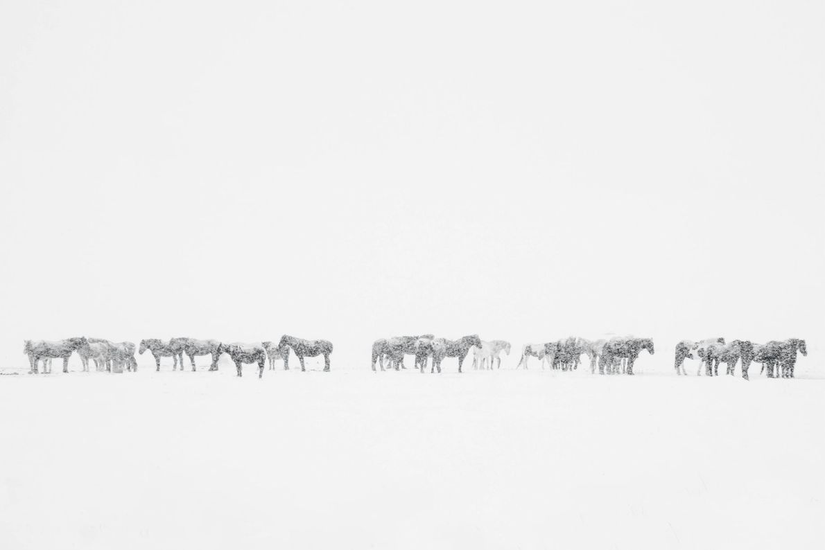 """""""A group of horses stands in the snow in my Star Valley, Wyoming"""" writes Your Shot ..."""