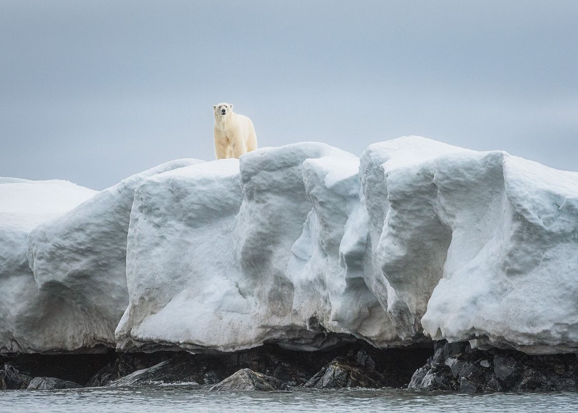 """""""This big healthy male polar bear was curious to see what these strange floating creatures were ..."""