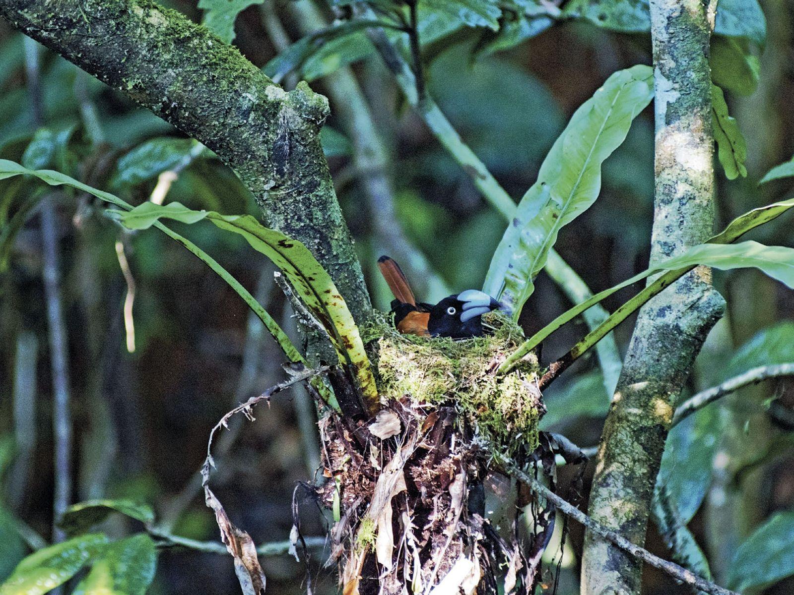 Partner Content: Wild Madagascar