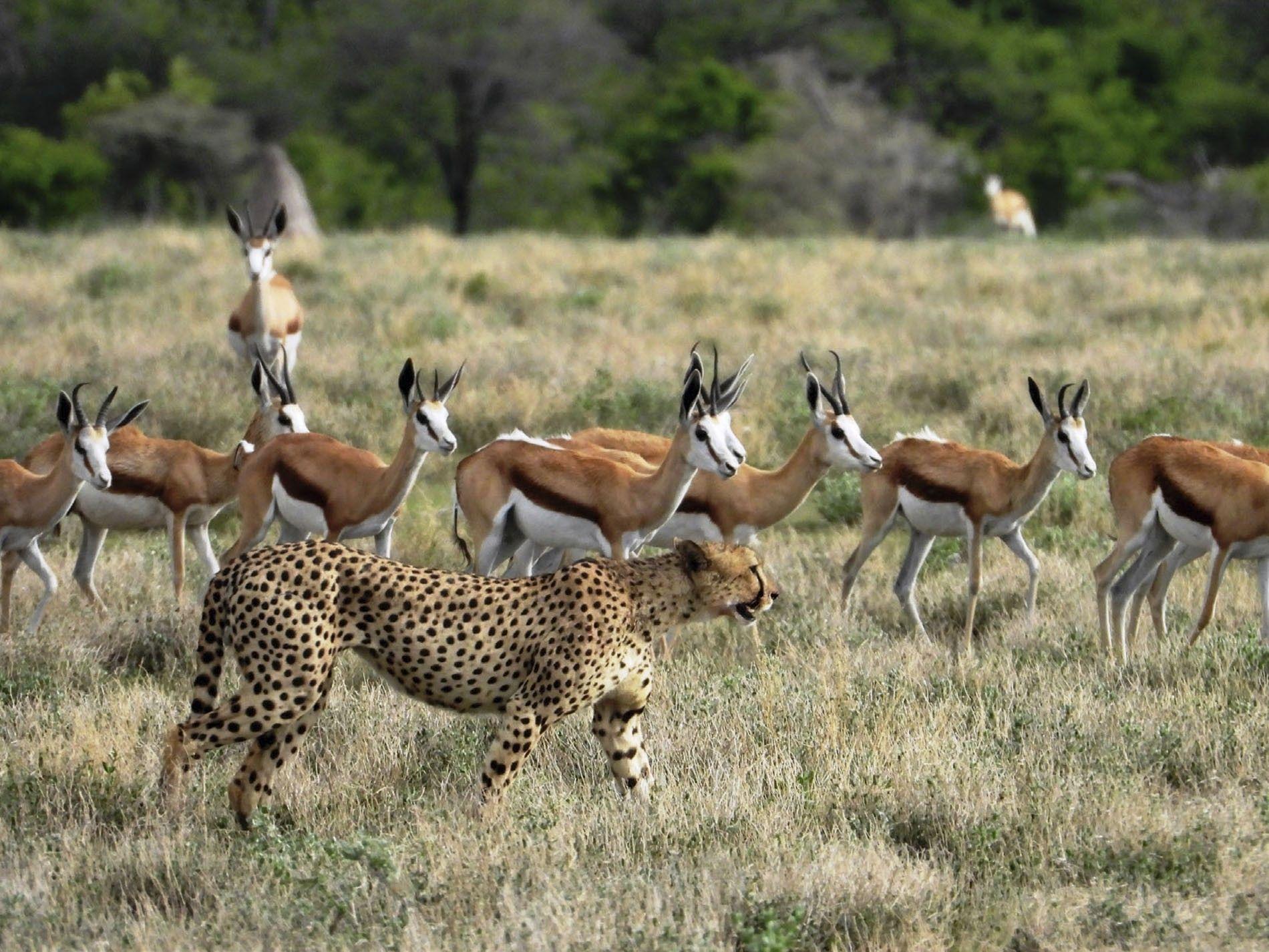 Exclusive Africa Tours & Safaris