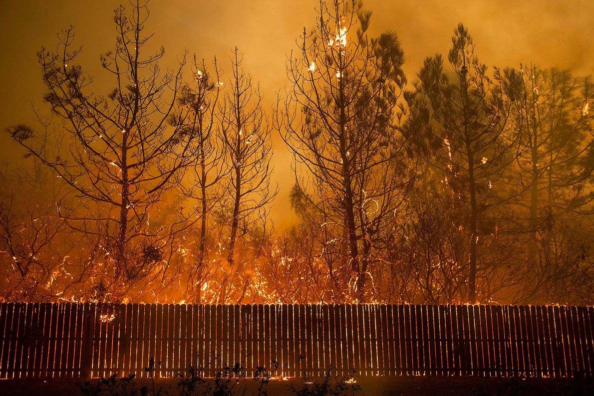 A wildfire burns trees in Paradise, California. Drought conditions have made California more likely to see ...