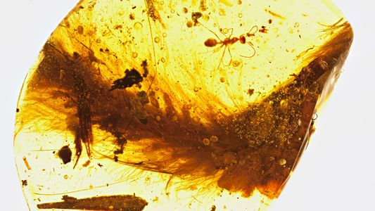 First Dinosaur Tail Found Preserved in Amber