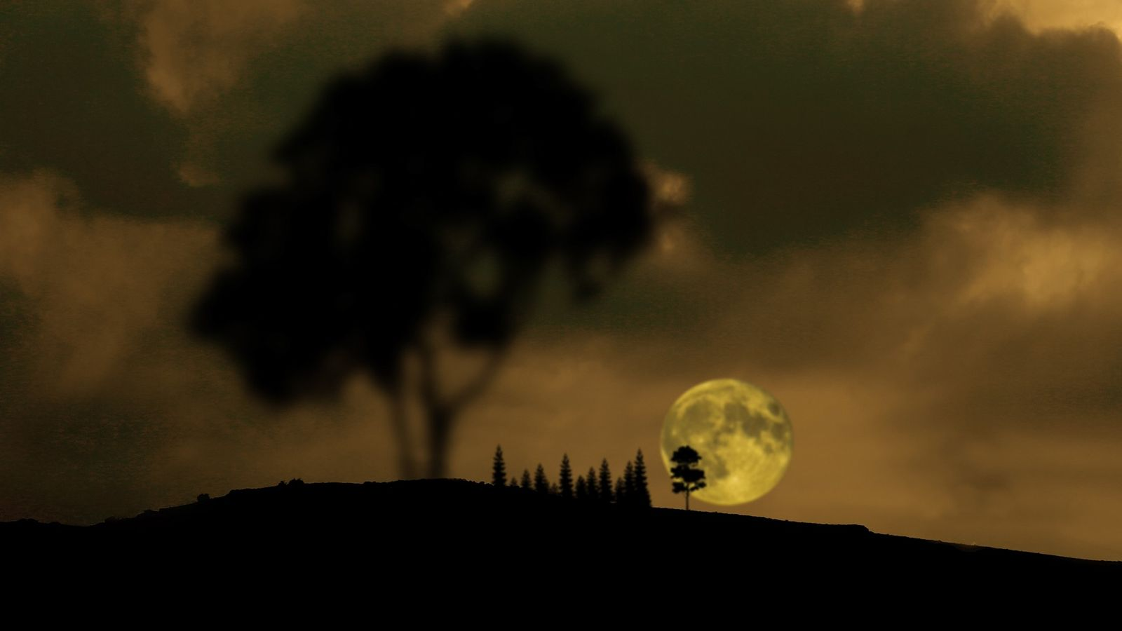 Pine trees punctuate the full moon over Konya, Turkey, as it rises ahead of the July ...