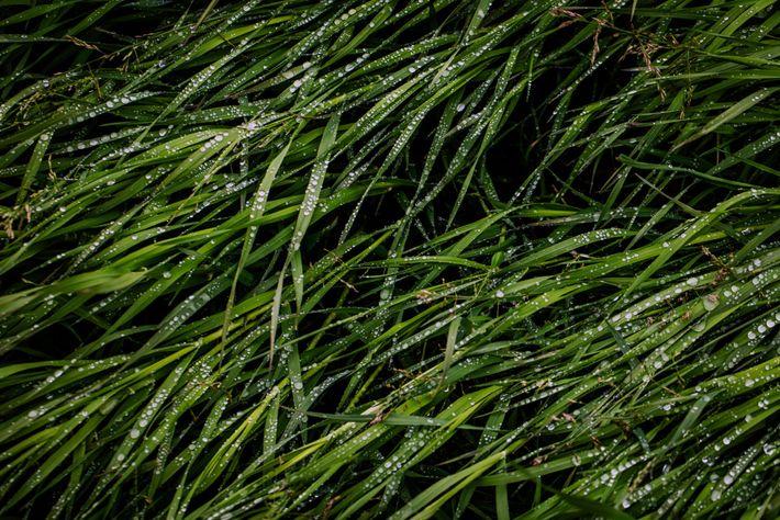 Tundra grass show melting moisture near where the Kolyma River meets the Arctic Ocean.