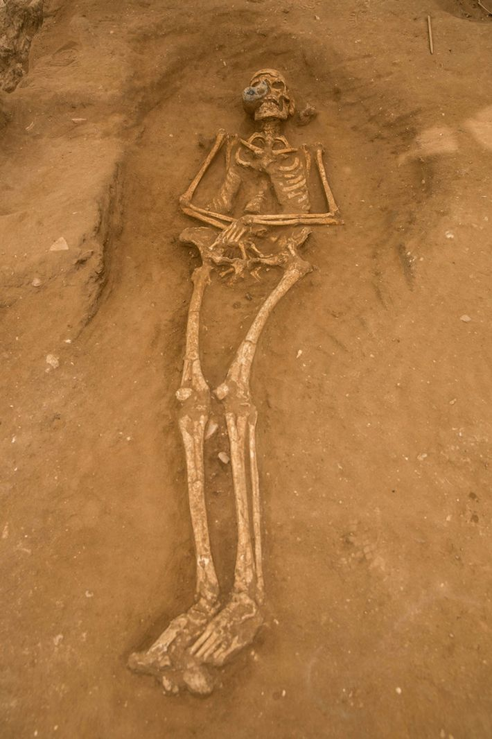 An adult burial in the Ashkelon cemetery features a small juglet, which most likely once held ...
