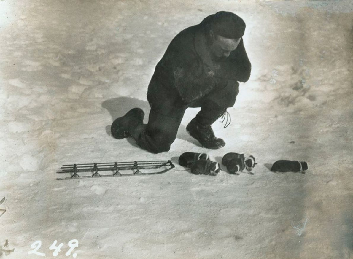 Supply officer George Black playfully harnesses puppies to a tiny sledge just days after they were ...