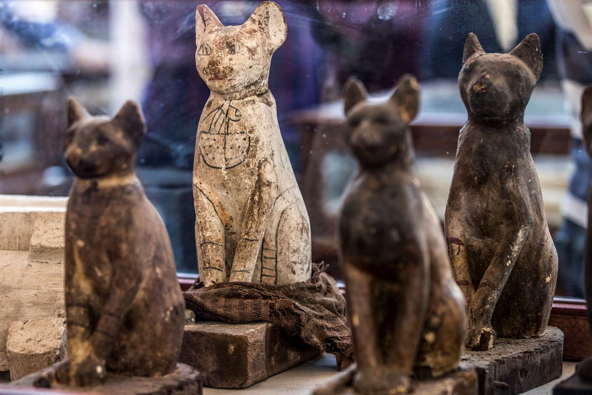 Along with animal mummies, dozens of 2,500-year-old animal statues were also discovered.