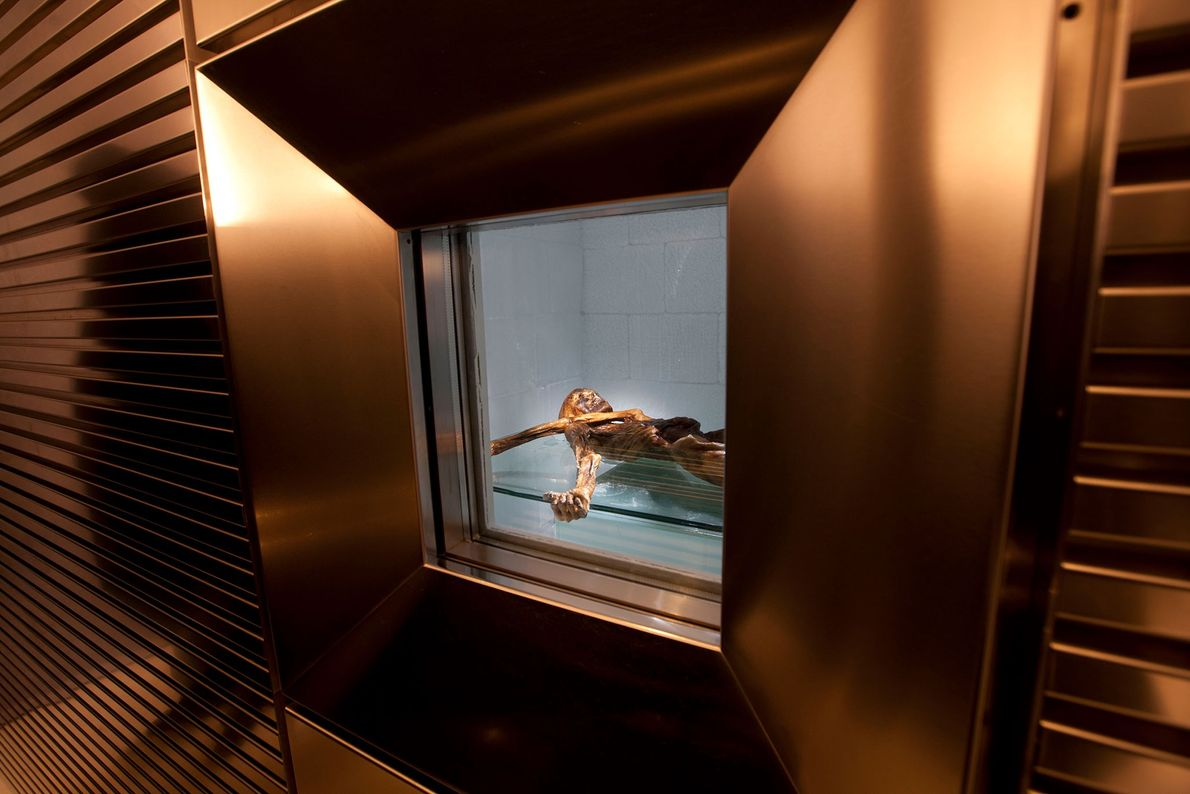 Ötzi and his artifacts have been exhibited at the South Tyrol Museum of Archaeology in Bolzano, ...