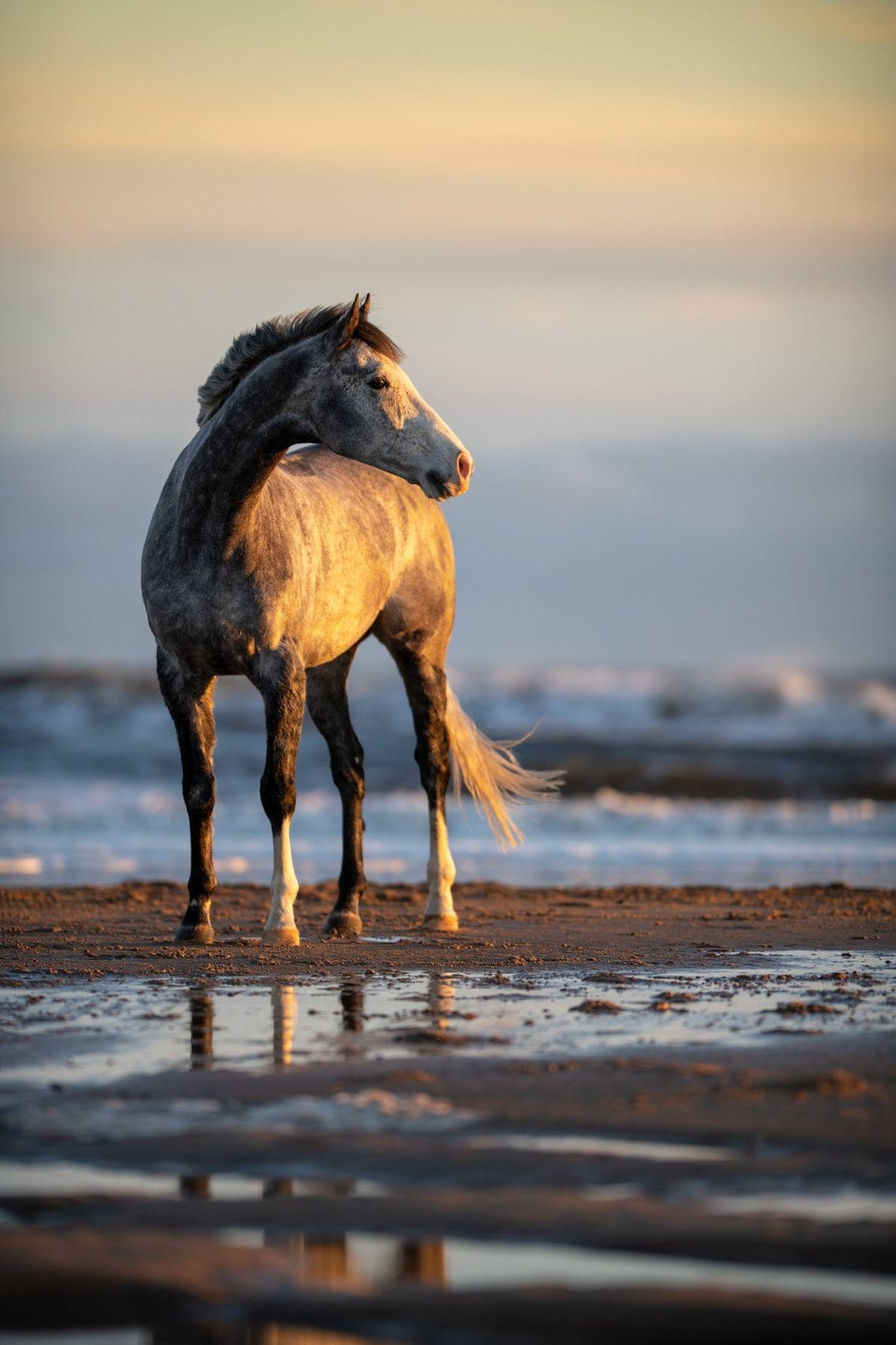 Your Shot photographer Alexandra Revenge captured this equine portrait on the beaches of Hartlepool, England.