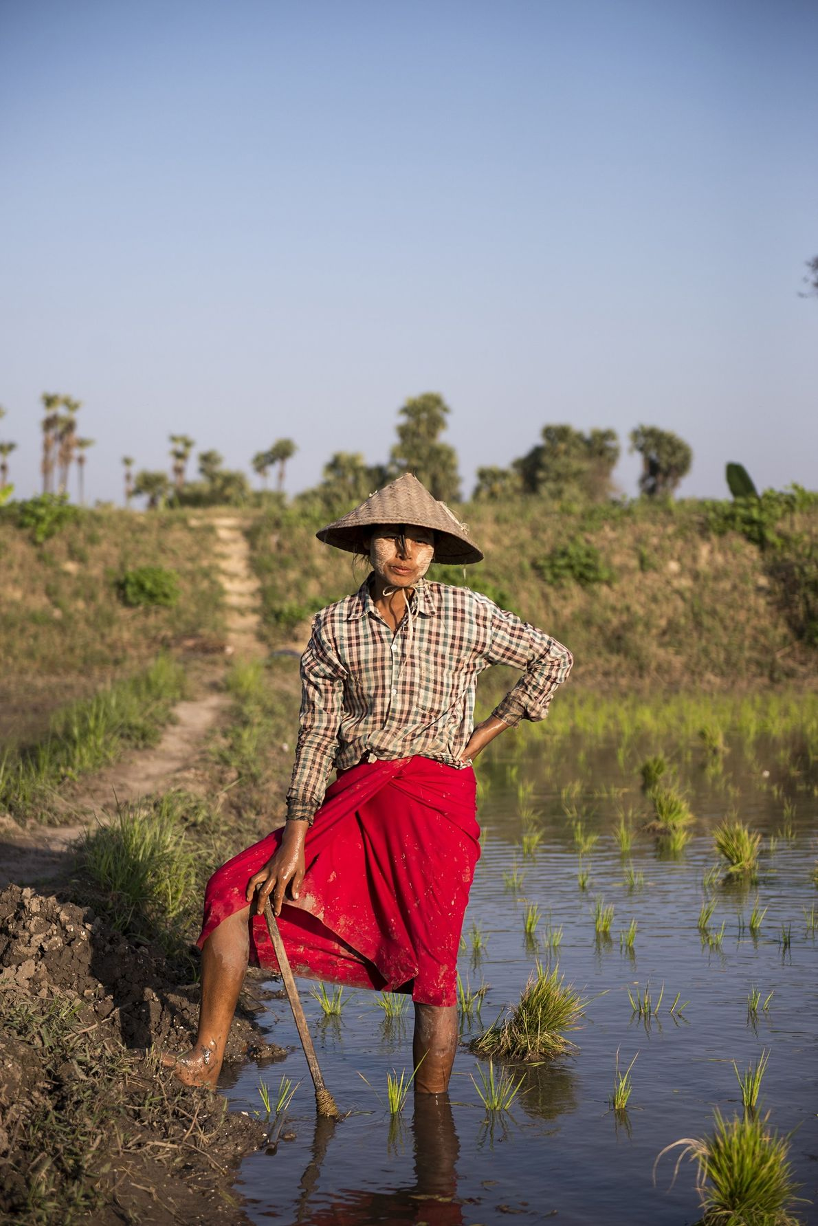 """""""The woman stopped to rest on the edge of the rice field in the vicinity of ..."""