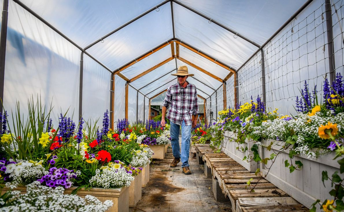 """""""New Castle Gardens co-owner Steve Cox checks on a customer order in a shaded greenhouse on ..."""