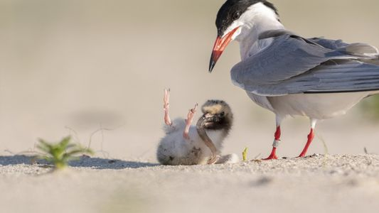 Desert Mists, Unsteady Chicks, and a Moment that Transcends Generations: Your Photos of the Week