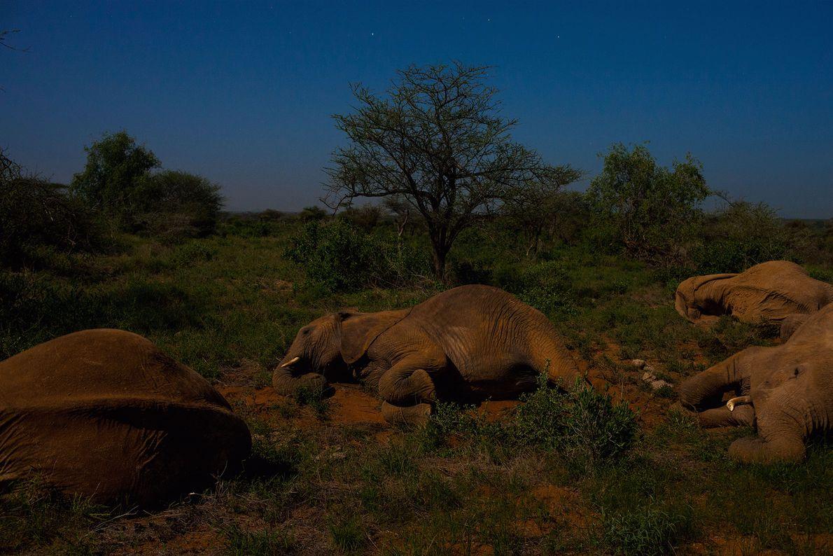 Elephants rest by moonlight.