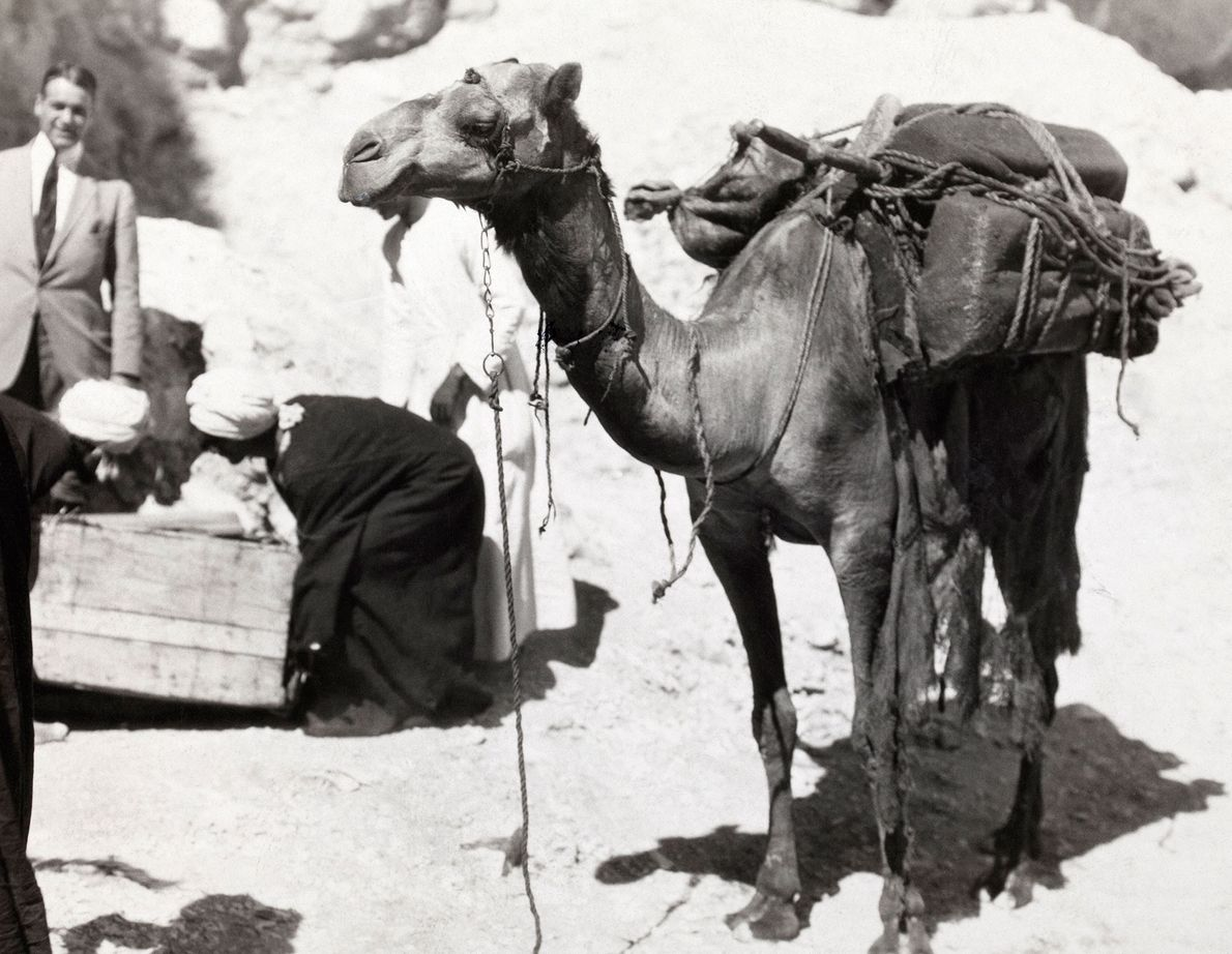 Visiting the Valley of the Kings can be hot business, even in February. This camel delivered ...