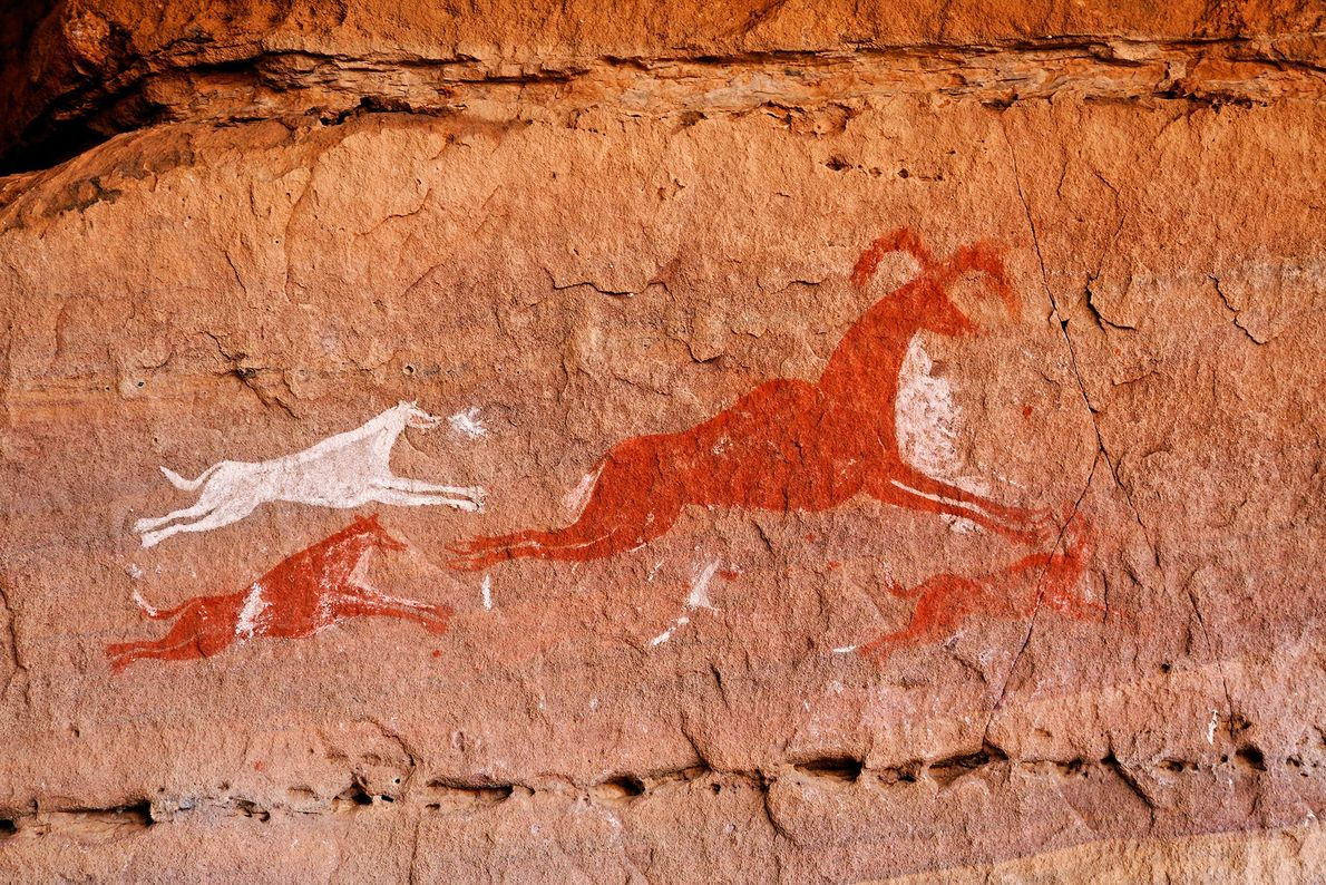 A pack of swift dogs are shown hunting an antelope in a rock art from Libya's ...