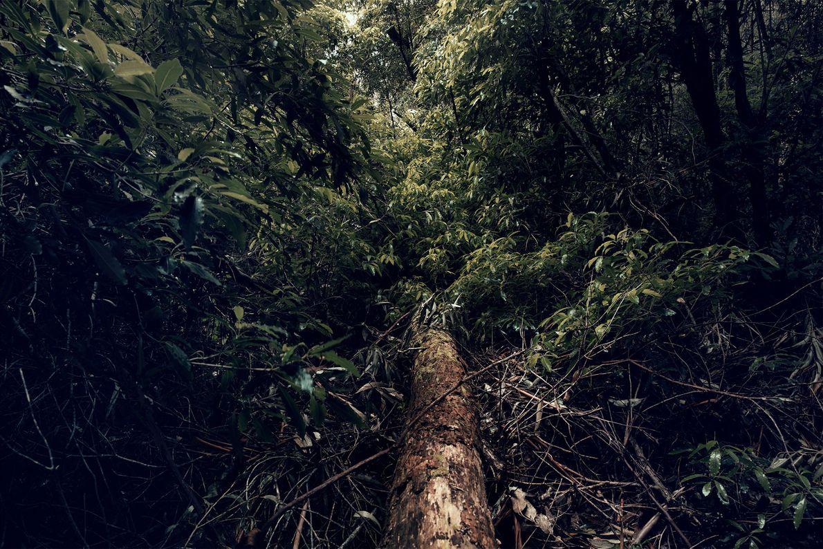 """When I feel I have too much in my mind, I go to nature,"" Kimelman says."