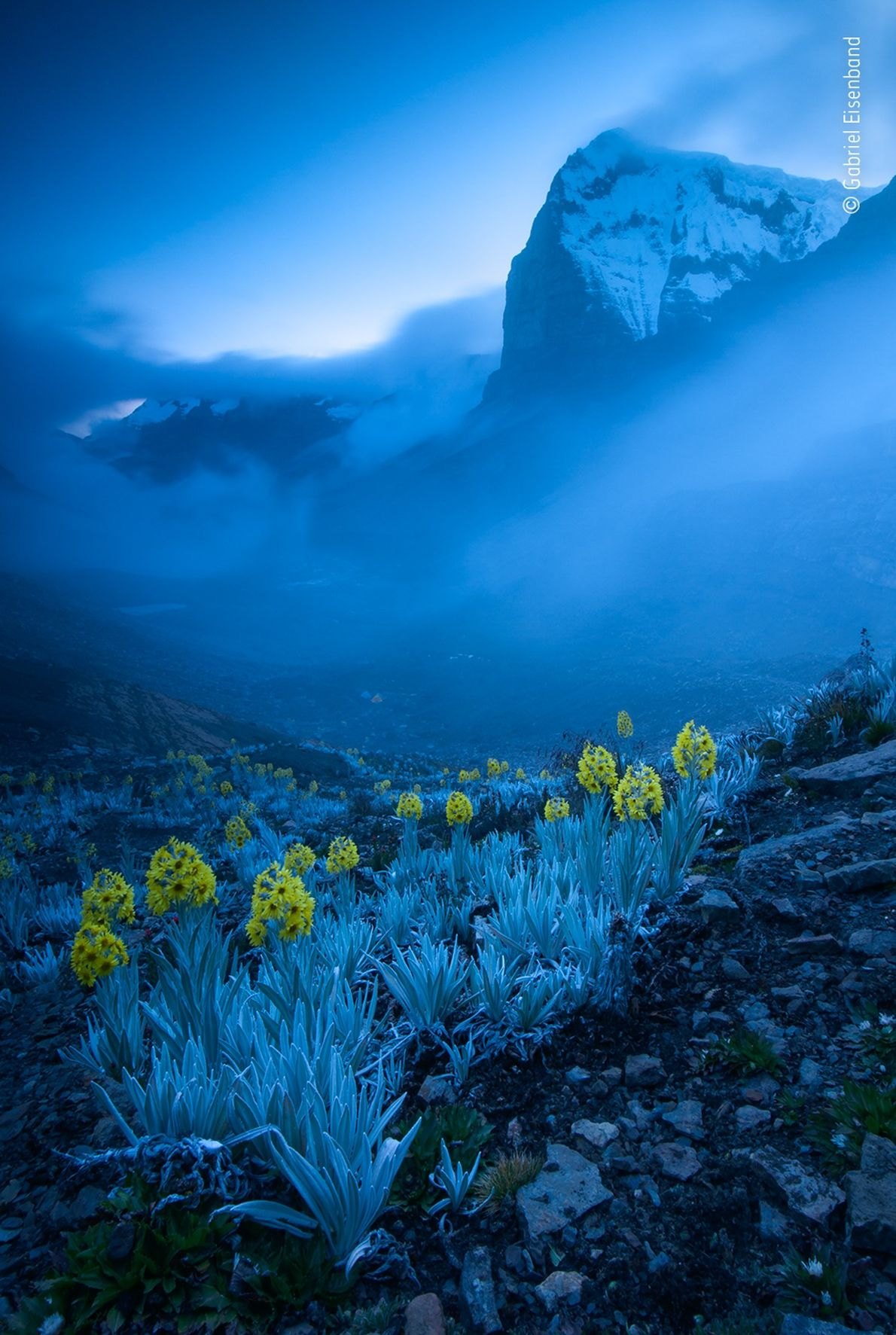 Gabriel Eisenband made this photograph of white arnica daisies, found only in Colombia. It won in ...