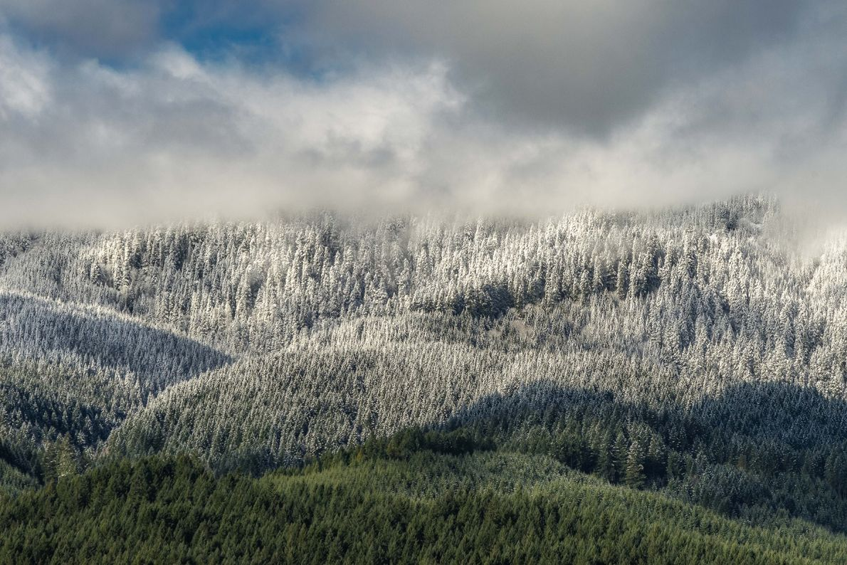 """""""The snow made an abrupt line on the mountains today, in the Oregon Coast Range,"""" writes ..."""