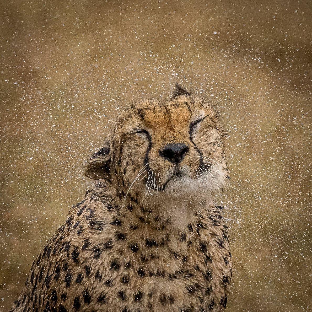Your Shot photographer Barbara Jensen Vorster made this image of a cheetah in the Maasai Mara ...