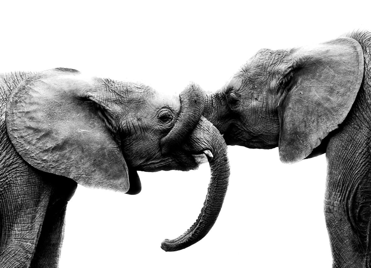 "Your Shot photographer Katerina Christina writes, ""Two orphan elephants share a tender moment at the David ..."