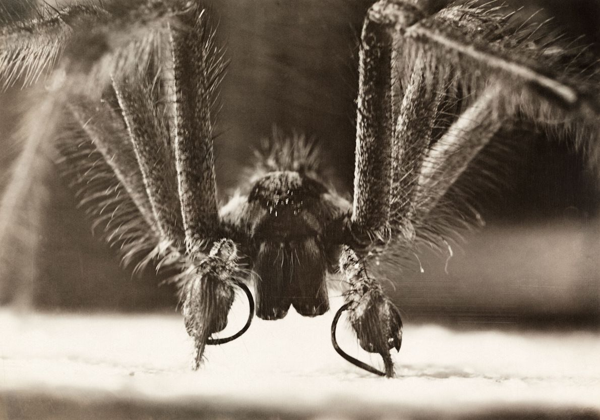 Almost all spiders carry venom, but its purpose is to stun or kill their insect prey. ...