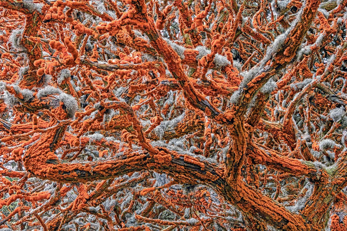 Zorica Kovacevic won the 'plants and fungi' category with this image of the branches of a ...