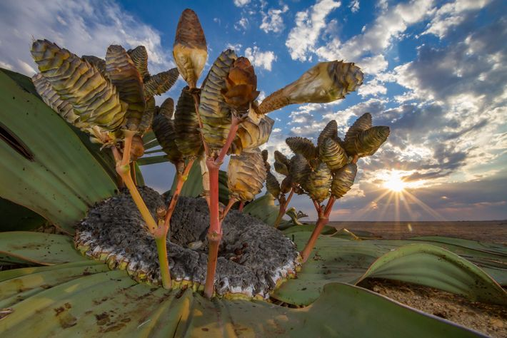 Jen Guyton, a National Geographic explorer, won the 'plants and fungi' category with a photo of ...