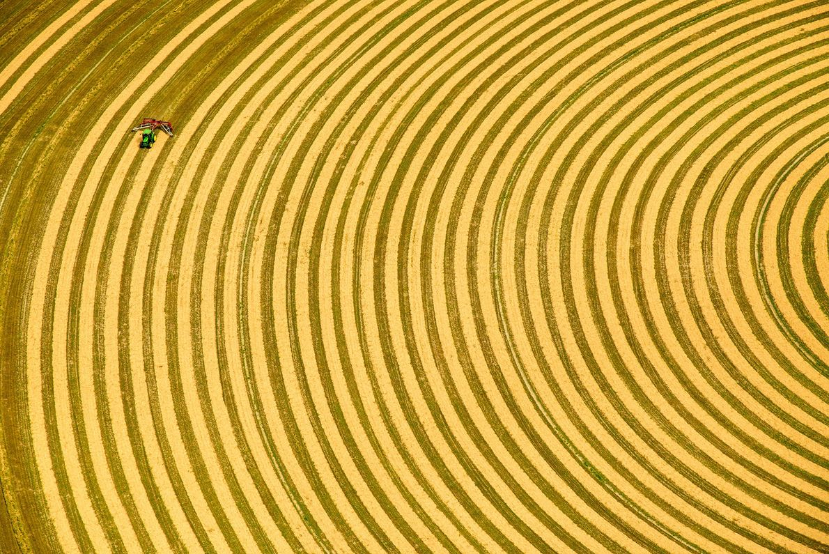 Pivot irrigation must be done in a circular pattern. Seen from above, a farmer rakes hay ...