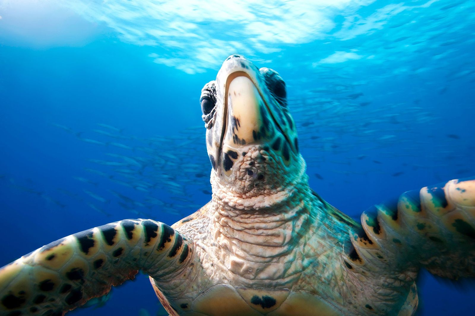 13 Graceful Pictures of Rare Sea Turtles