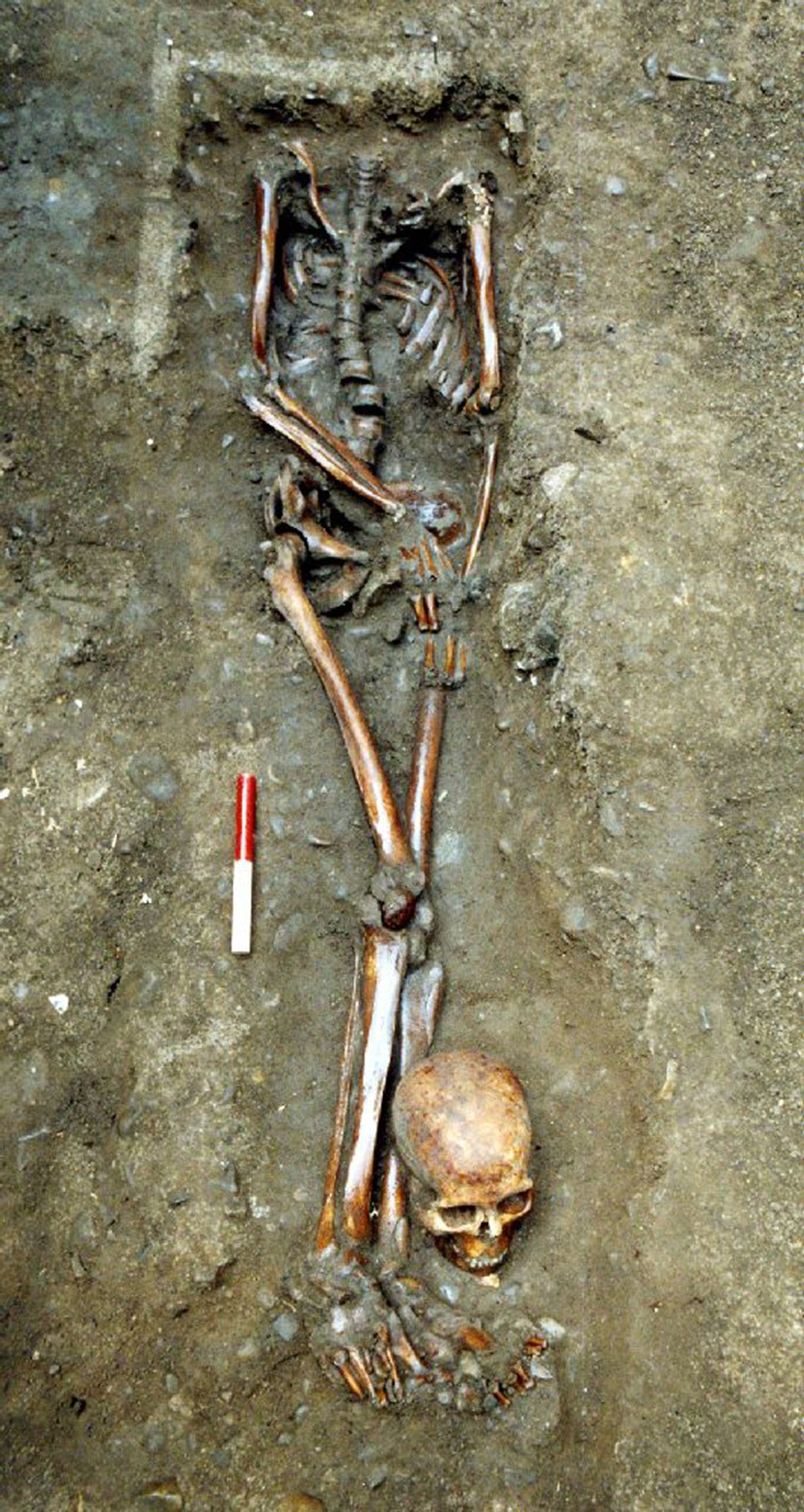 The beheaded skeletons were buried with their skulls, which inadvertently helped archaeologists understand where they came ...
