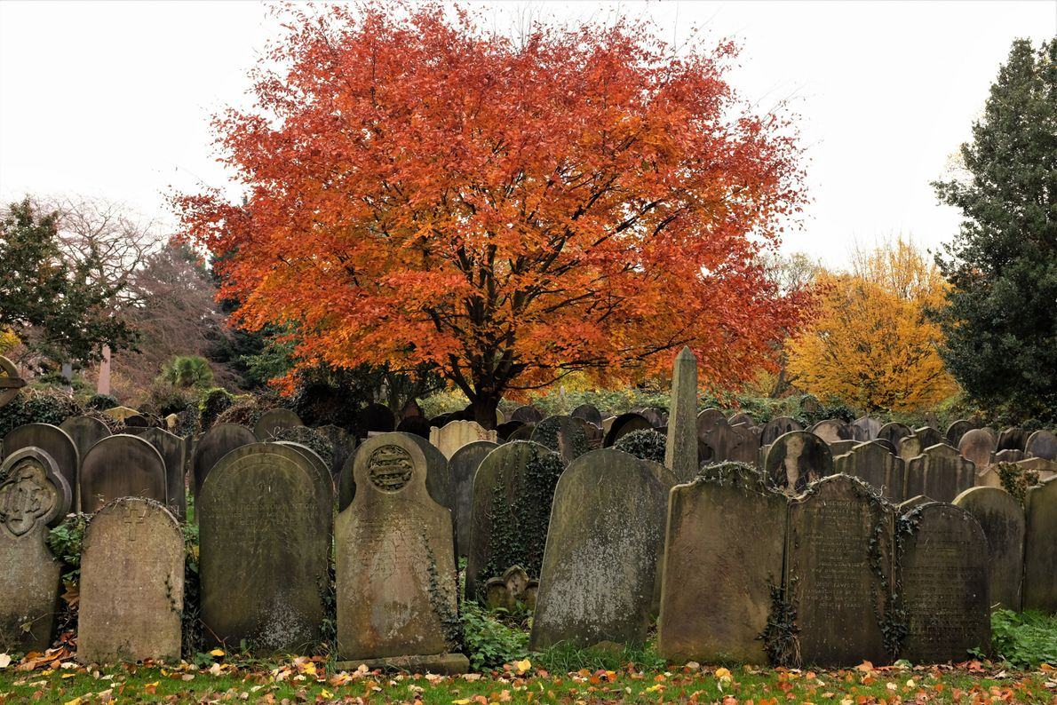 """Katie Thornton: """"As the population of English cities boomed during the industrial revolution, local churchyards became ..."""