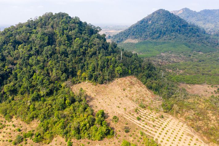 Cleared forests in Preah Vihear Province, in northern Cambodia near the border with Loas. The South ...