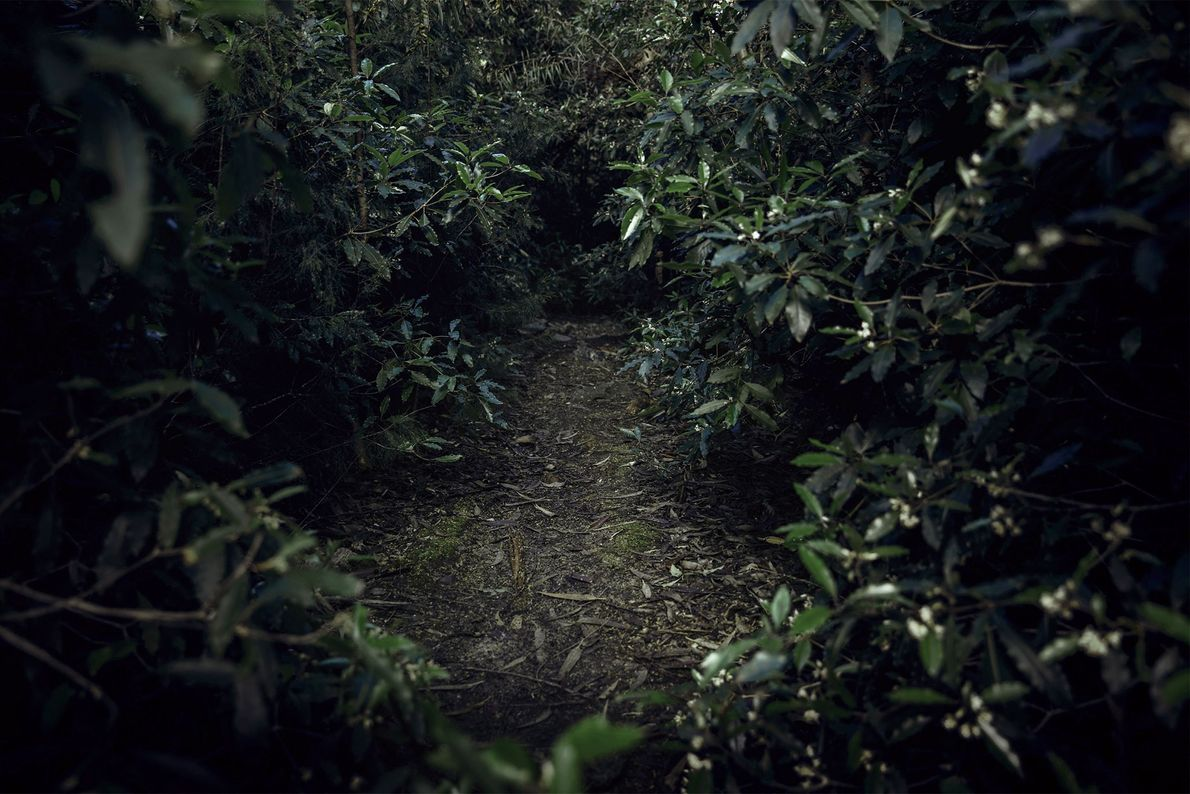 """""""I just enjoyed the feeling of going nowhere,"""" says Kimelman. """"I just let myself get lost."""""""