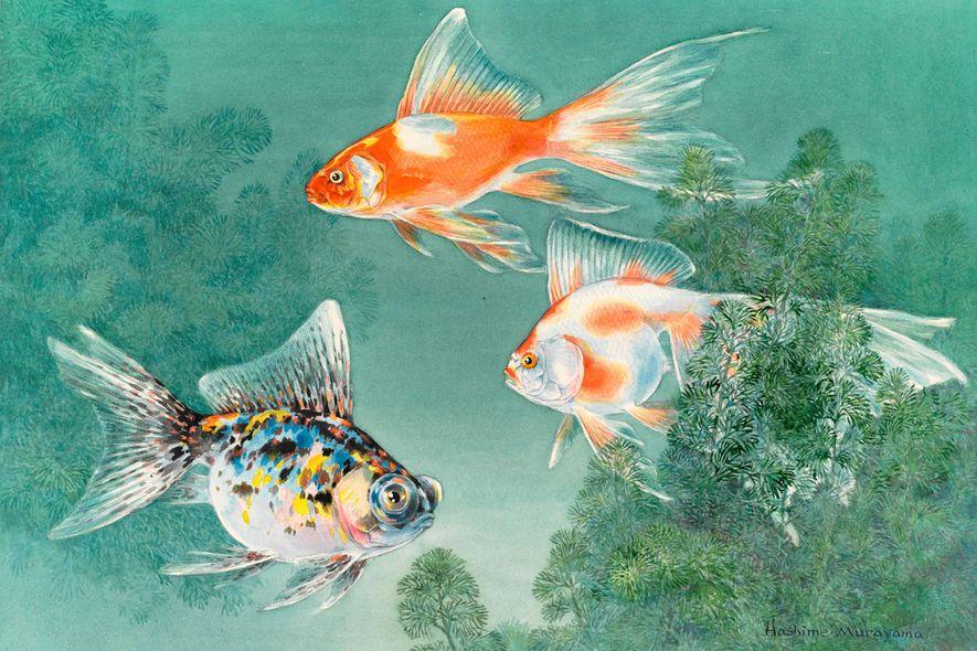 An illustration shows three types of goldfish swimming through aquatic plants.