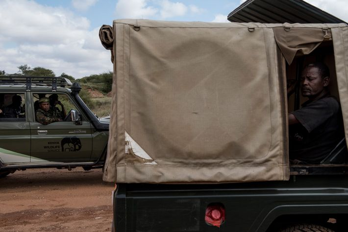 Team members prepare to return to their base after collaring two elephants in Tsavo West National ...