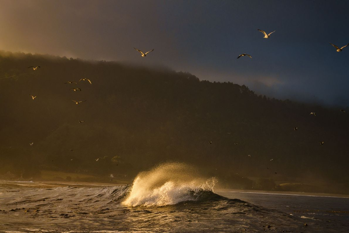 Seagulls fly out to sea at sunrise in Big Sur, California.