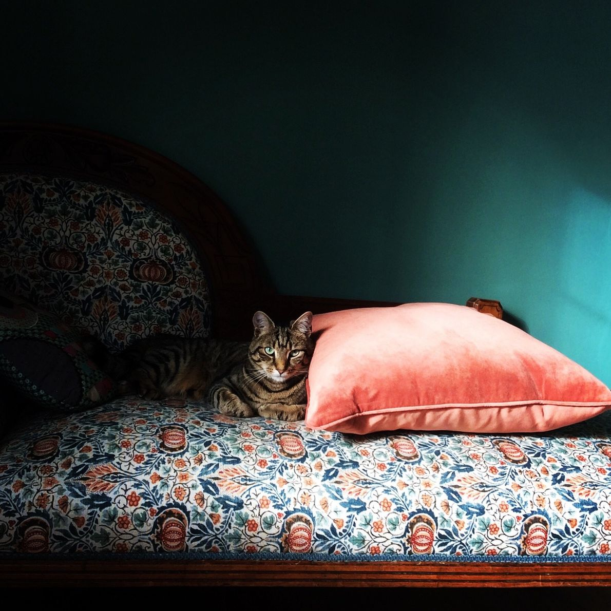 Your Shot photographer Wendy Thomas made this portrait of her cat, Mr. Muffles, also known as ...