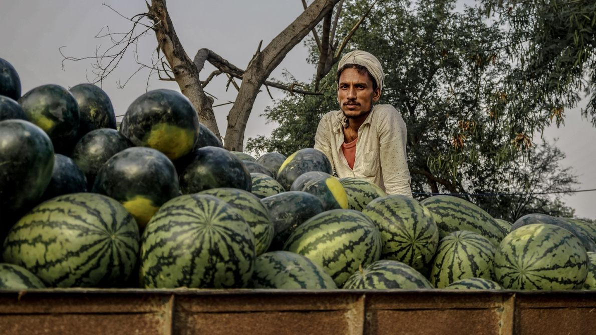 """This farmer travels around 60 kilometers every day on his tractor trolley to sell fresh watermelon,"" ..."