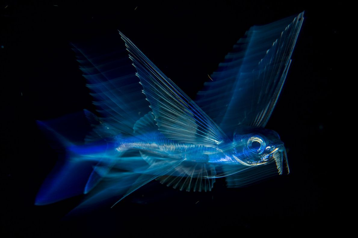 'Night flight'—an image of flying fish off of Palm Beach in Florida by Michael Patrick O'Neill—took ...