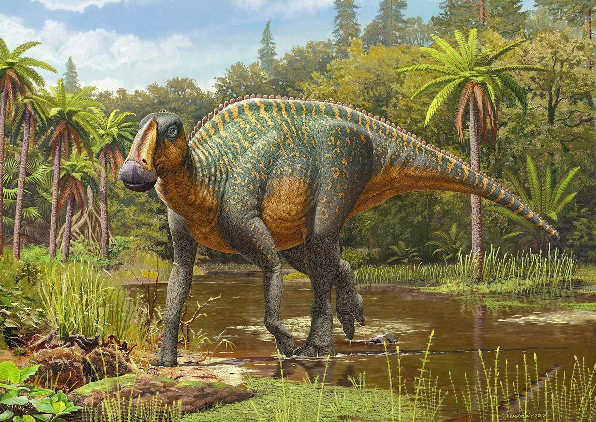 """""""Anasazisaurus horneri"""" Depicted here by Ukraine-based artist Sergey Krasovskiy, the duck-billed hadrosaur 'Anasazisaurus horneri' sports stripy camouflage ..."""