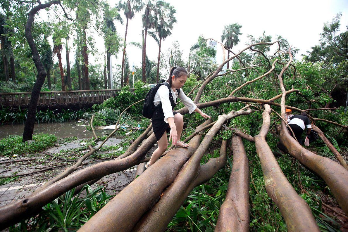Pedestrians attempt to walk through uprooted trees in Shenzen City.