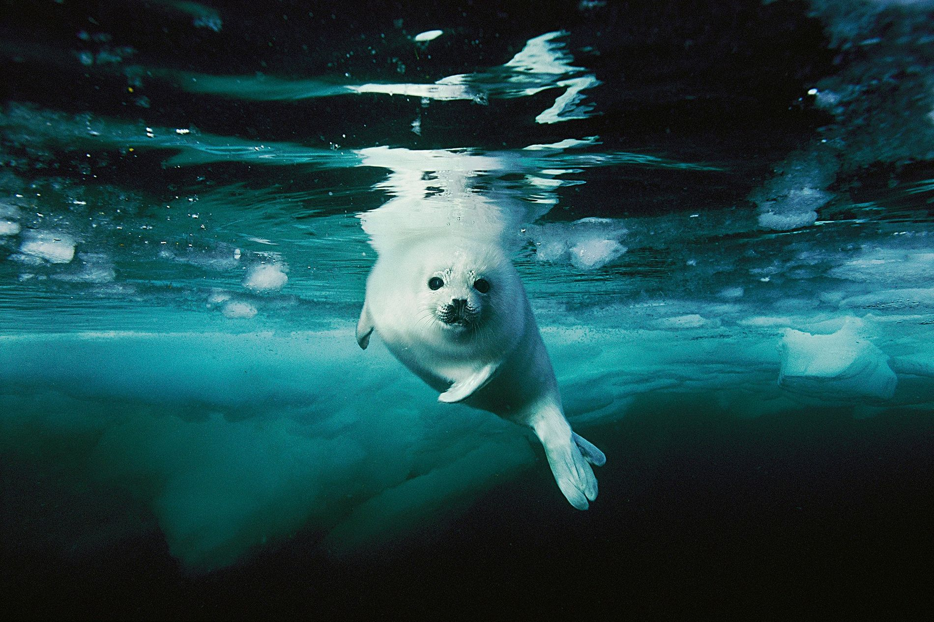 National Geographic Photographers' Favorite Wildlife Pictures